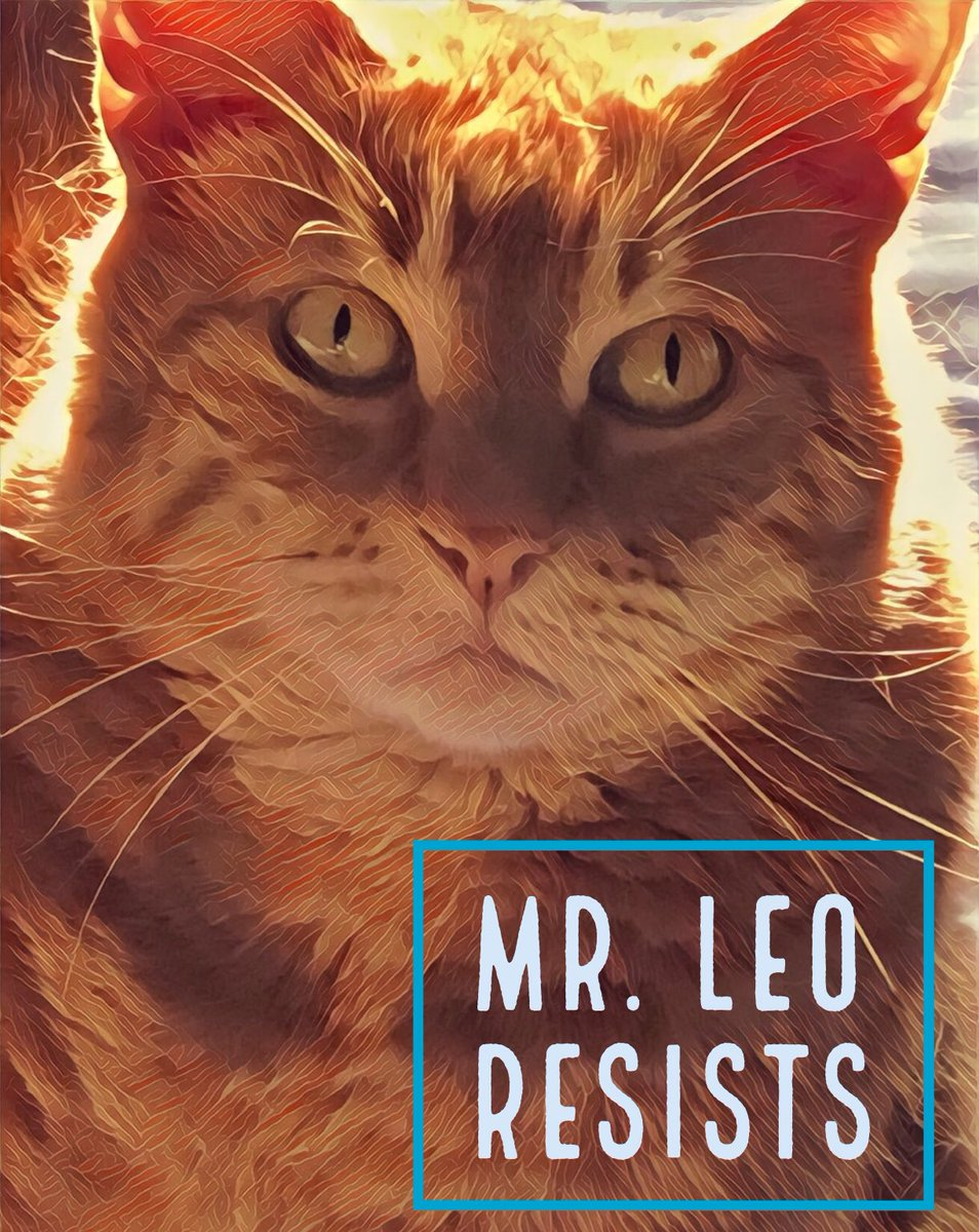 "It's hard to keep a sunny disposition in the midst of the madness of the Trump ""Era"". But my beautiful ginger cat Mr. Leo is also sunny and ALWAYS ready to #RESIST.  #NationalLazyDay #Caturday #CatsofTwitter #PetsResist<br>http://pic.twitter.com/r5enui5i5K"