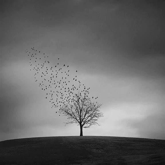 by Ricardo Da Cunha
