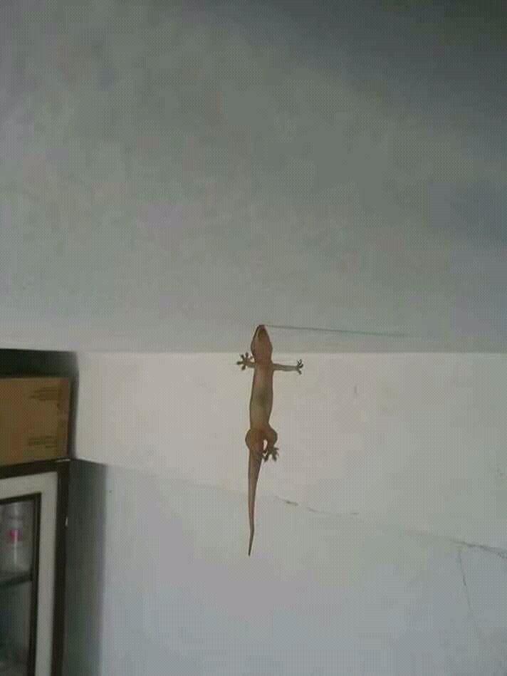 kapit lang tayo guys like this lizard 💪 ctto