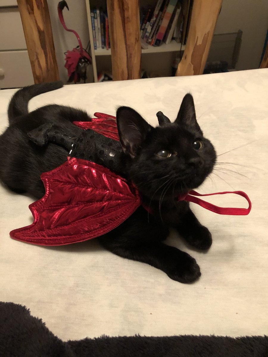BIHch IM DYING HE LIKES HIS HALLOWEEN COSTUME AND ITS PERFECT FOF HIM