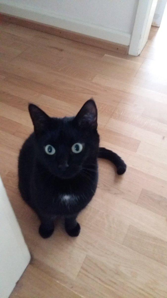 tendu chatte noire