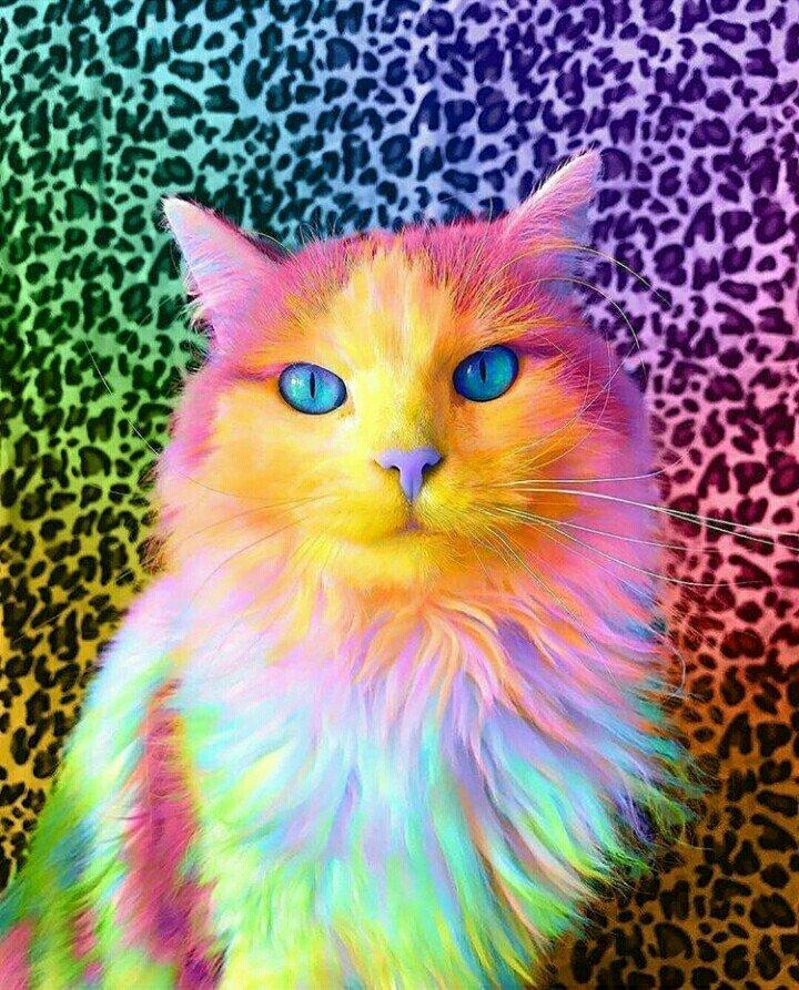 этого картинка разноцветные коты почему нельзя сделать