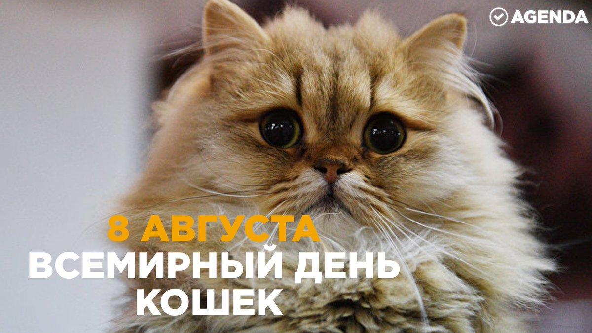 Котёнки, коты, кошечки и кошководы и... псы :-) - Страница 45 DkB7xVjXcAACAmC