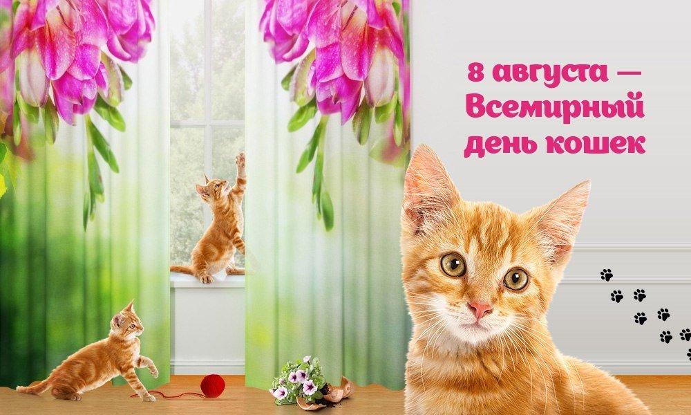 Картинки с праздником кошек, анимация