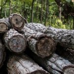 Image for the Tweet beginning: Myanmar's wood industry devastated by