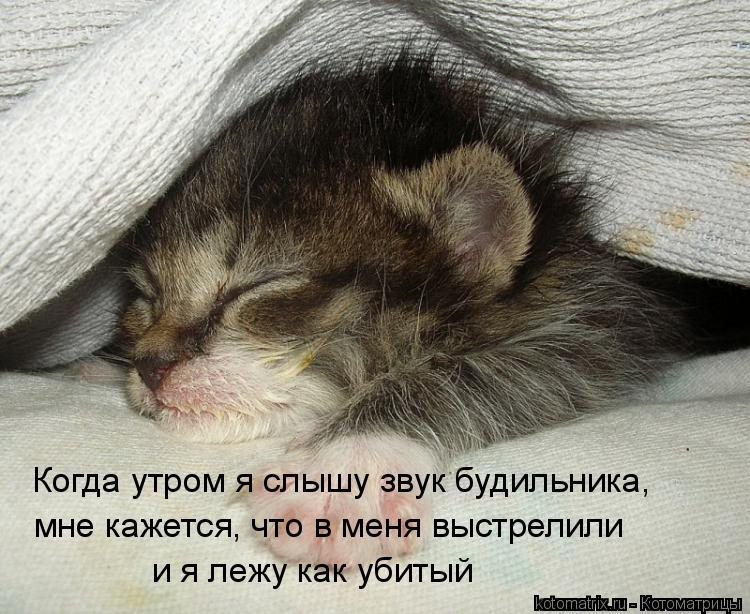 С добрым утром котенок картинки с надписями
