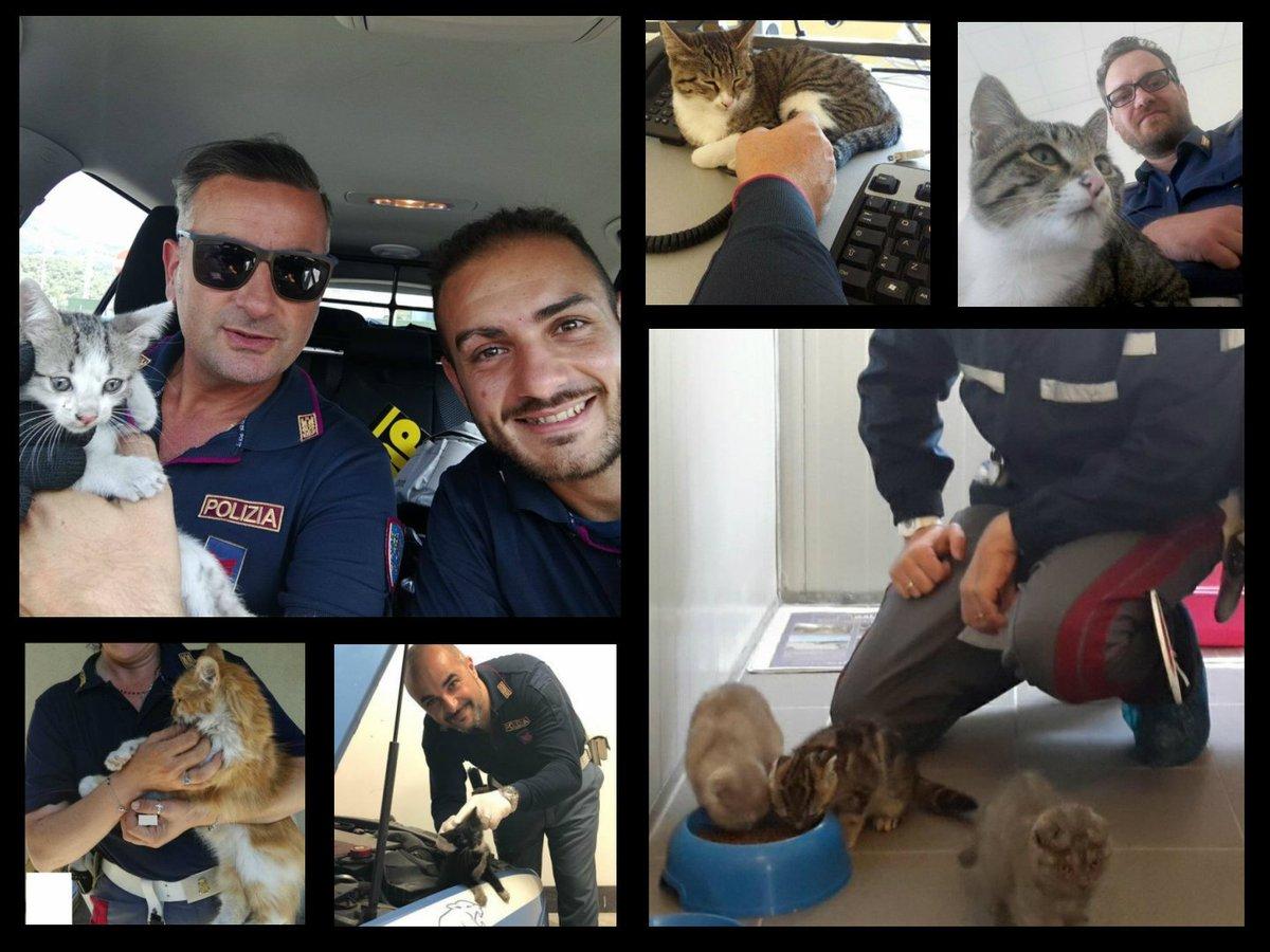 #InternationalCatDay Buona vita a tutti i gatti che abbiamo salvato ♥  - Ukustom