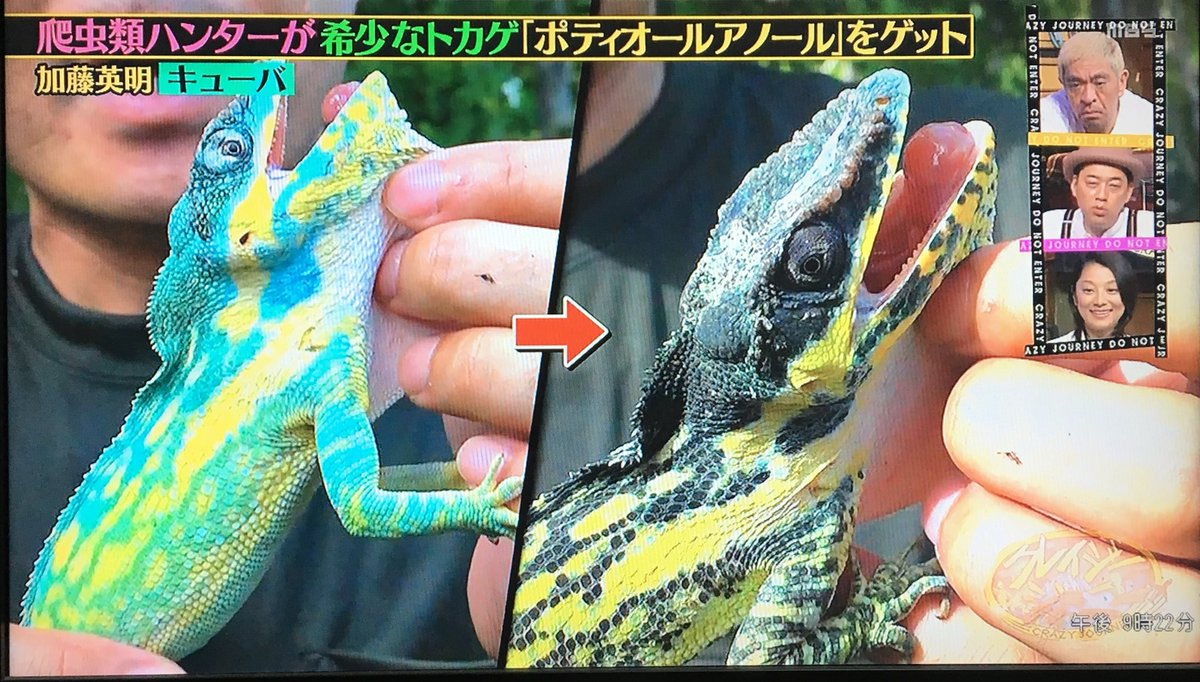 加藤 爬虫類 英明 ハンター