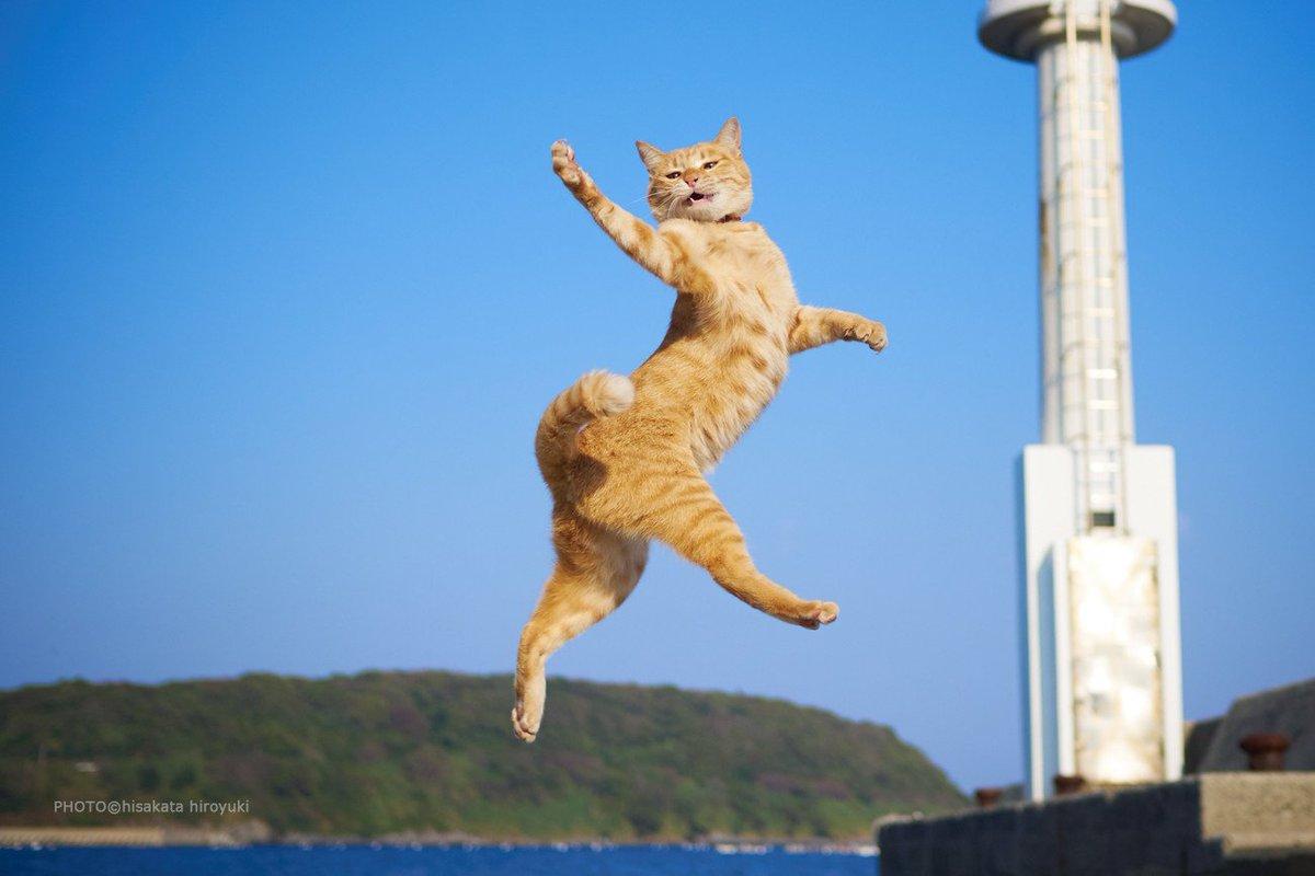 Котёнки, коты, кошечки и кошководы и... псы :-) - Страница 45 DkENhsrUYAAg6_4