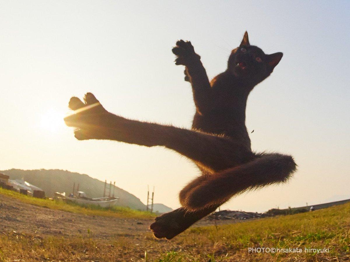Котёнки, коты, кошечки и кошководы и... псы :-) - Страница 45 DkENjLbVAAAfKE6