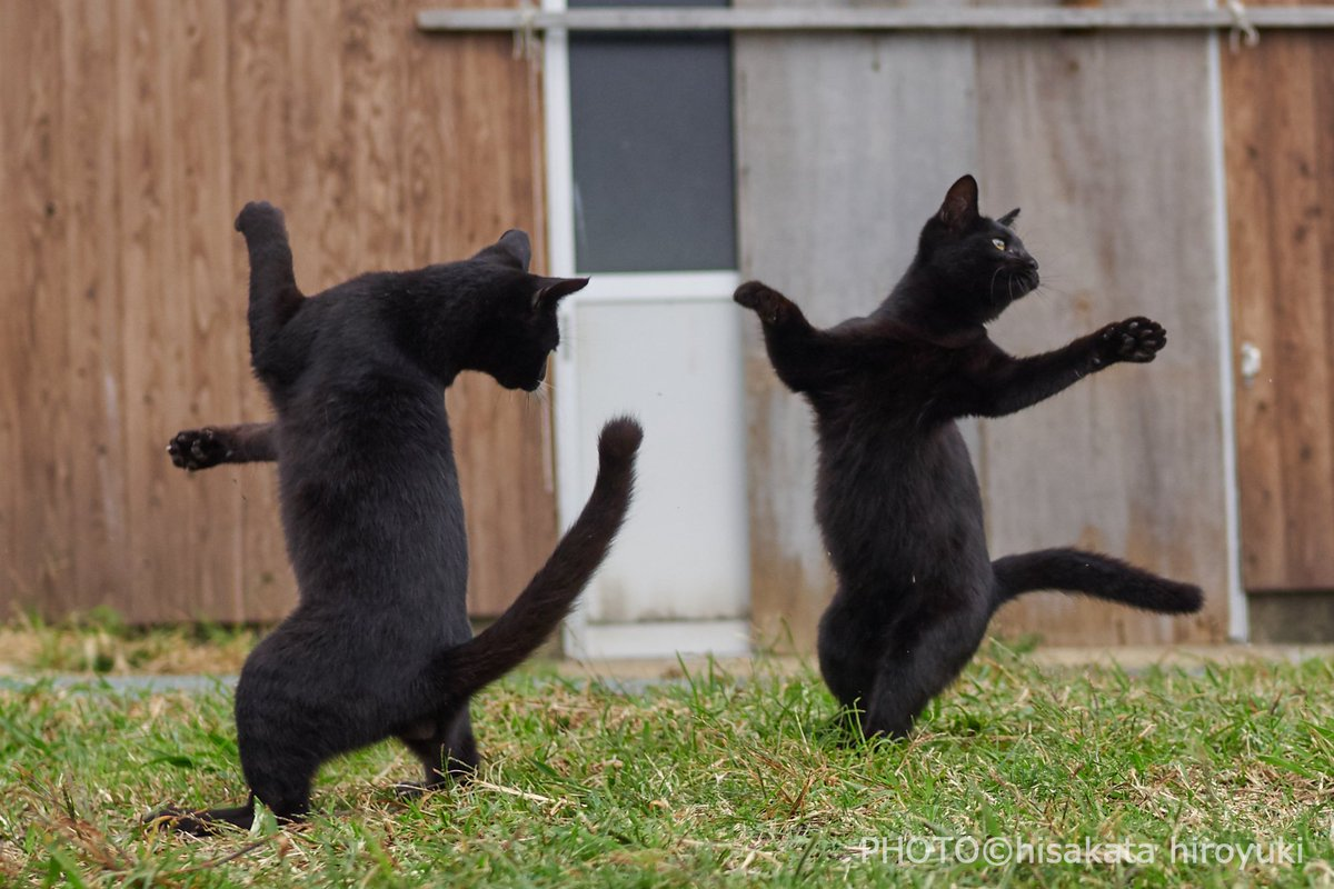 Котёнки, коты, кошечки и кошководы и... псы :-) - Страница 45 DkEOYRCU8AANvJm