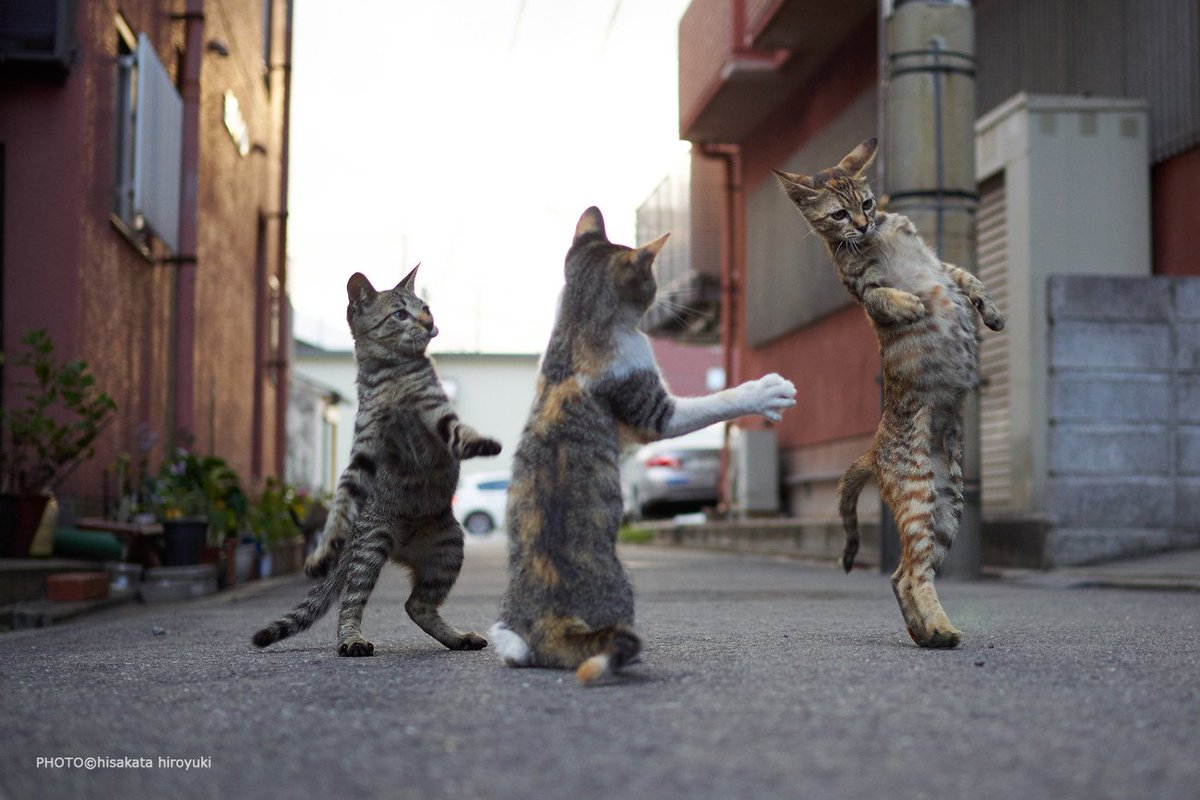 Котёнки, коты, кошечки и кошководы и... псы :-) - Страница 45 DkEObcjU0AIwvDV
