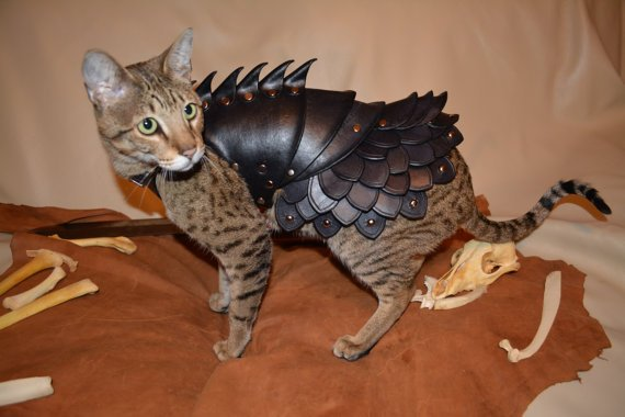 Winter is coming: Suit a #cat in battle armor worthy of @GameOfThrones!  Read more in my @CNET article here: https://t.co/VKhqtONJnN   cc @IAMLenaHeadey @Maisie_Williams @KristianNairn  #InternationalCatDay #GameOfThrones #GoT