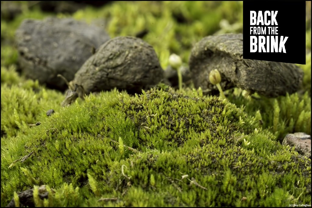 pdf Plants for Arid Lands: Proceedings of the Kew International Conference on Economic Plants for Arid Lands held in the Jodrell Laboratory, Royal Botanic Gardens, Kew, England, 23–27