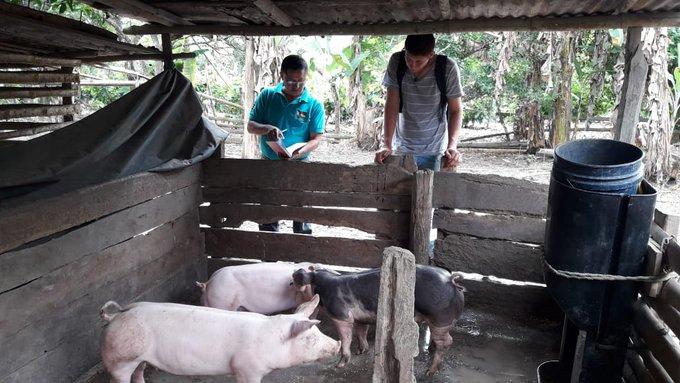 Estudiantes de V ciclo de la carrera de Agropecuaria del #ITSPEM identificando emprendimientos in situ en Santa Ana y Olmedo para el fortalecimiento a la reproducción, engorde y comercialización de cerdos mejorado. Foto