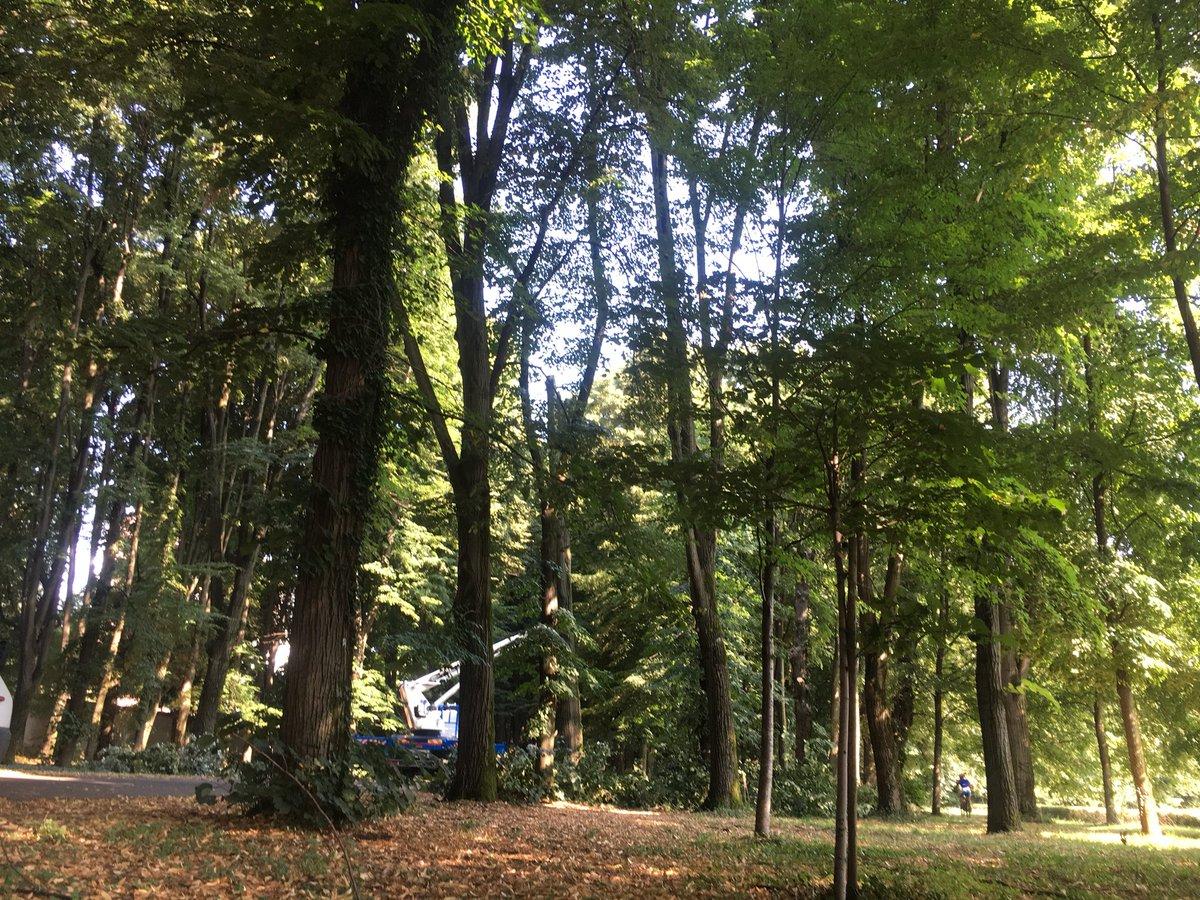 In corso lavori di #restauro e #recupero patrimonio arboreo del #vialedeiTigli #reggiadimonza  http:// www.reggiadimonza.it/it/content/news/viale-dei-tigli-recupero-del-patrimonio-arboreo  - Ukustom