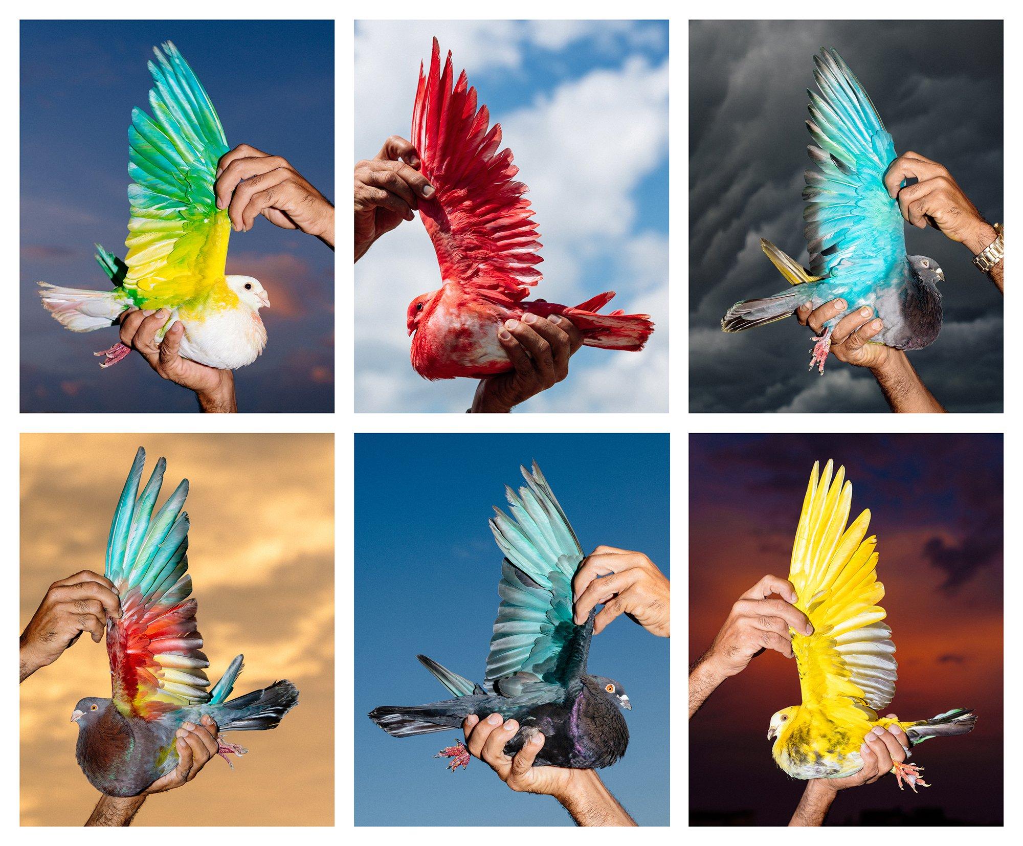 Vibrant photos of Cuban pigeon racing: https://t.co/PGWo9IlLib https://t.co/I1Q1NXpkqX