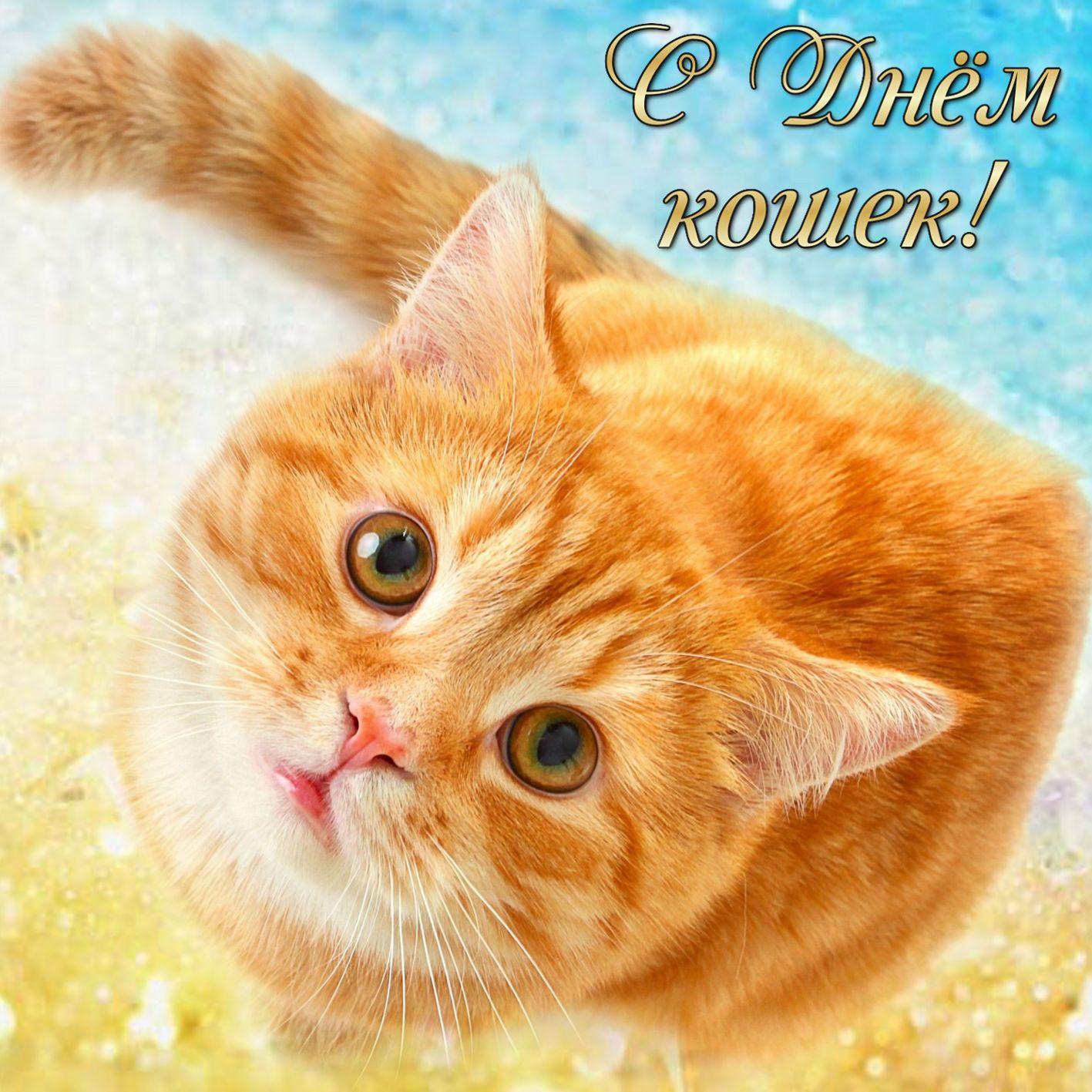 Открытки, всемирный день кошек открытка