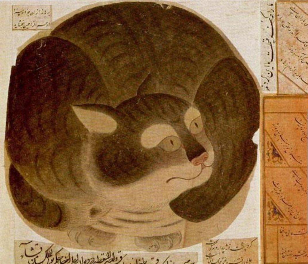 Картинки по запросу кошки и ислам
