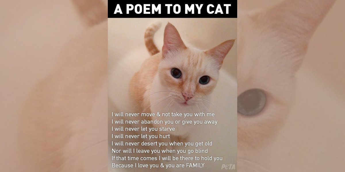 With Love From My Cat