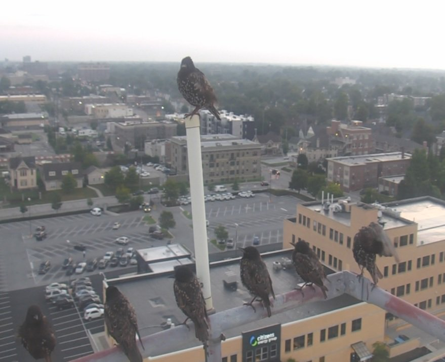 The 7 stooges (starlings) are back this morning, hanging out atop the WISH-TV tower in our back parking lot.   #INwx #Daybreak8 @WISH_TV<br>http://pic.twitter.com/Nkrywj9AWQ