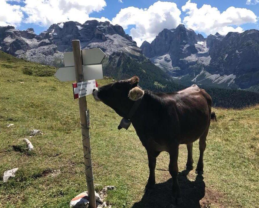 Le nostre signore del #latte van per #rifugi sui #sentieri delle Dolomiti di Brenta #lattetrento #montagna #pascoli @Spressadop  - Ukustom