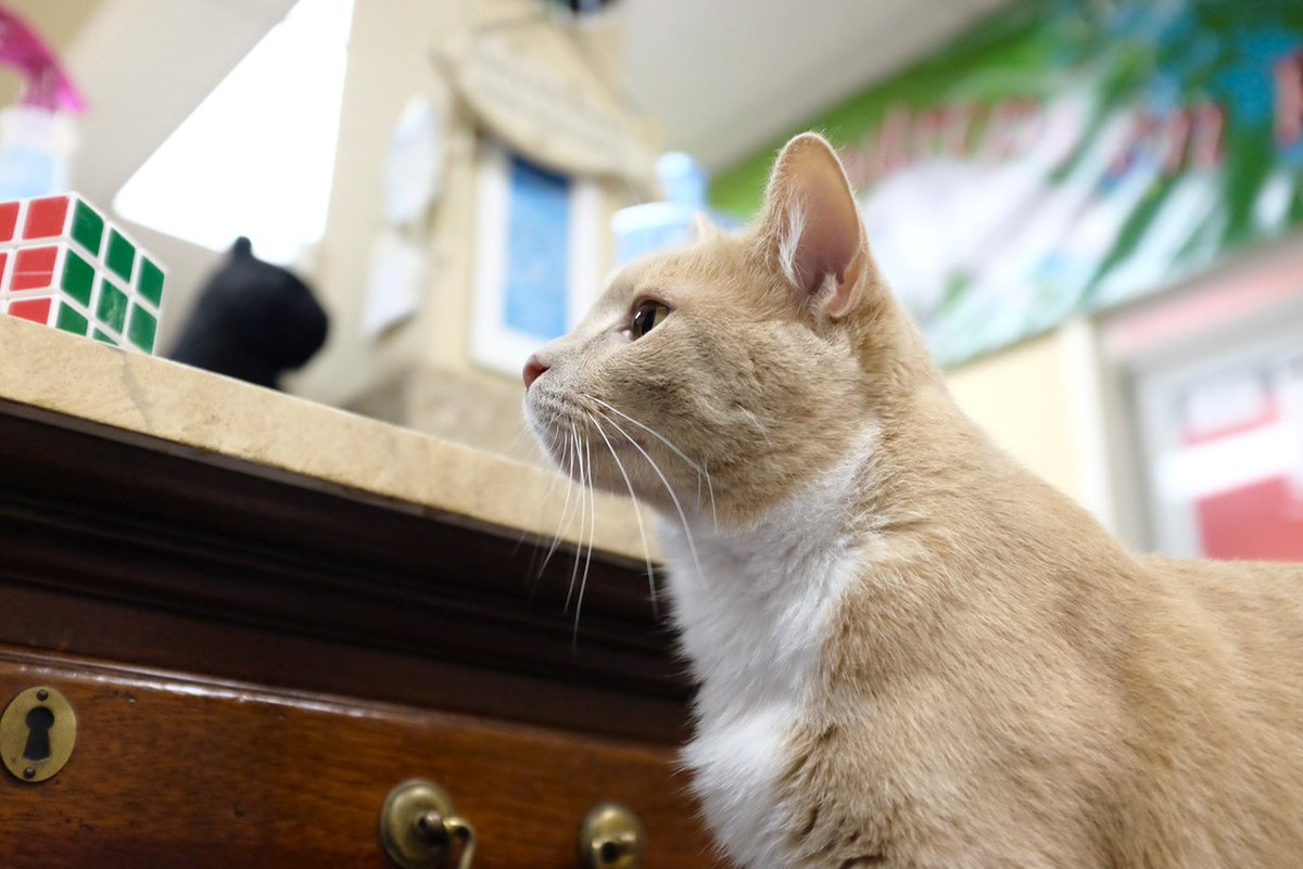 #5WordWishForTheFuture Mama gets her new shelter! Then we&#39;ll be able to help more kitties, accomplish our mission, and have a bigger impact on the Triangle area! <br>http://pic.twitter.com/7Ny3yOpgxk