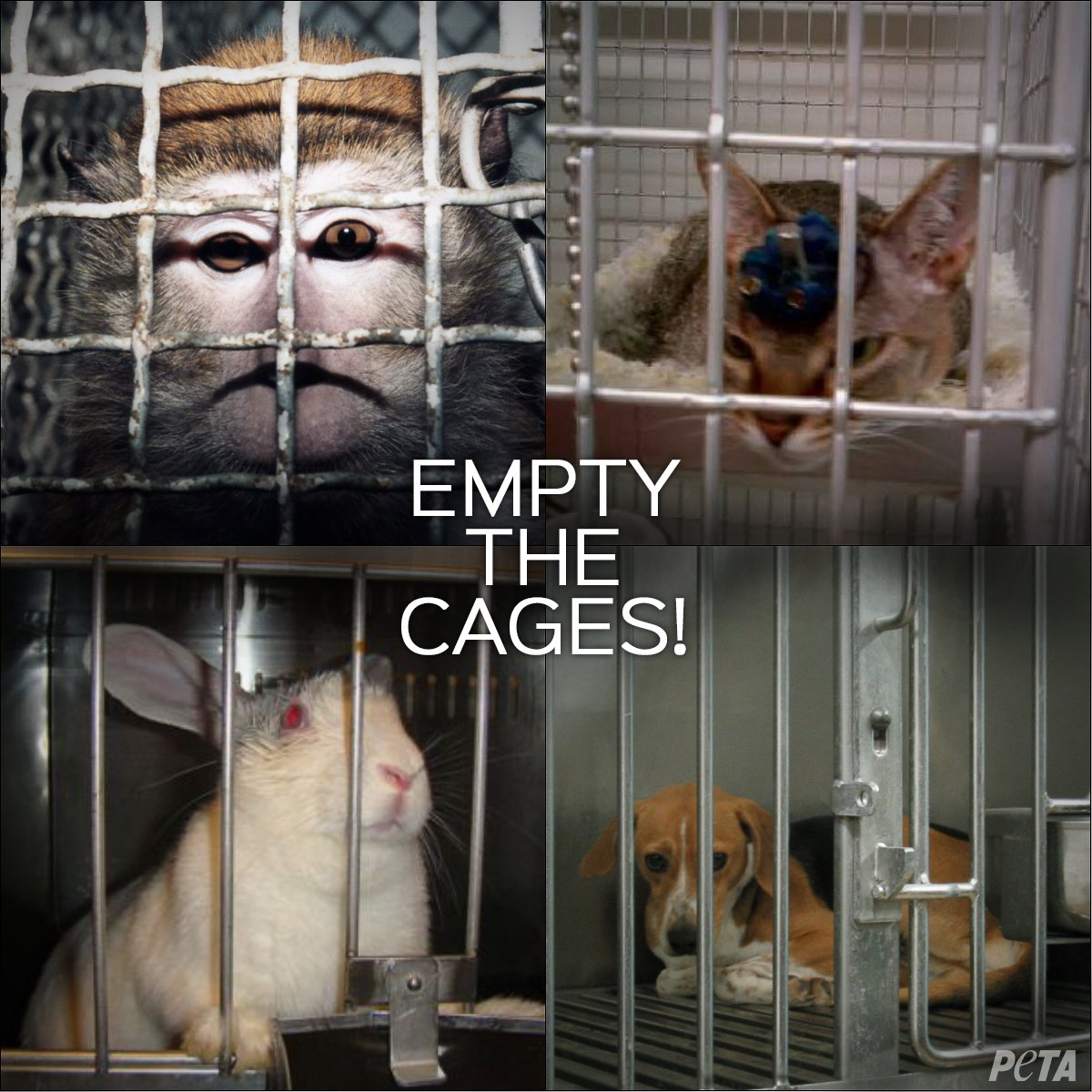 All the cages are empty. #5WordWishForTheFuture <br>http://pic.twitter.com/eXOZWxvE3F