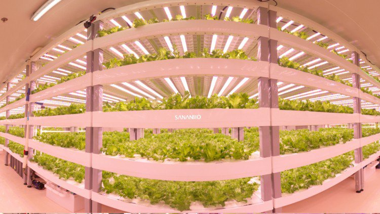 AgriFood News: Singapore's Largest Indoor Farm, SoftBank to Invest $750m into Pizza Robot? SWIIM Raises $3m,more  http:// agfundernews.com/agrifood-news- singapores-largest-indoor-farm.html &nbsp; … <br>http://pic.twitter.com/h6l5l2fnMd