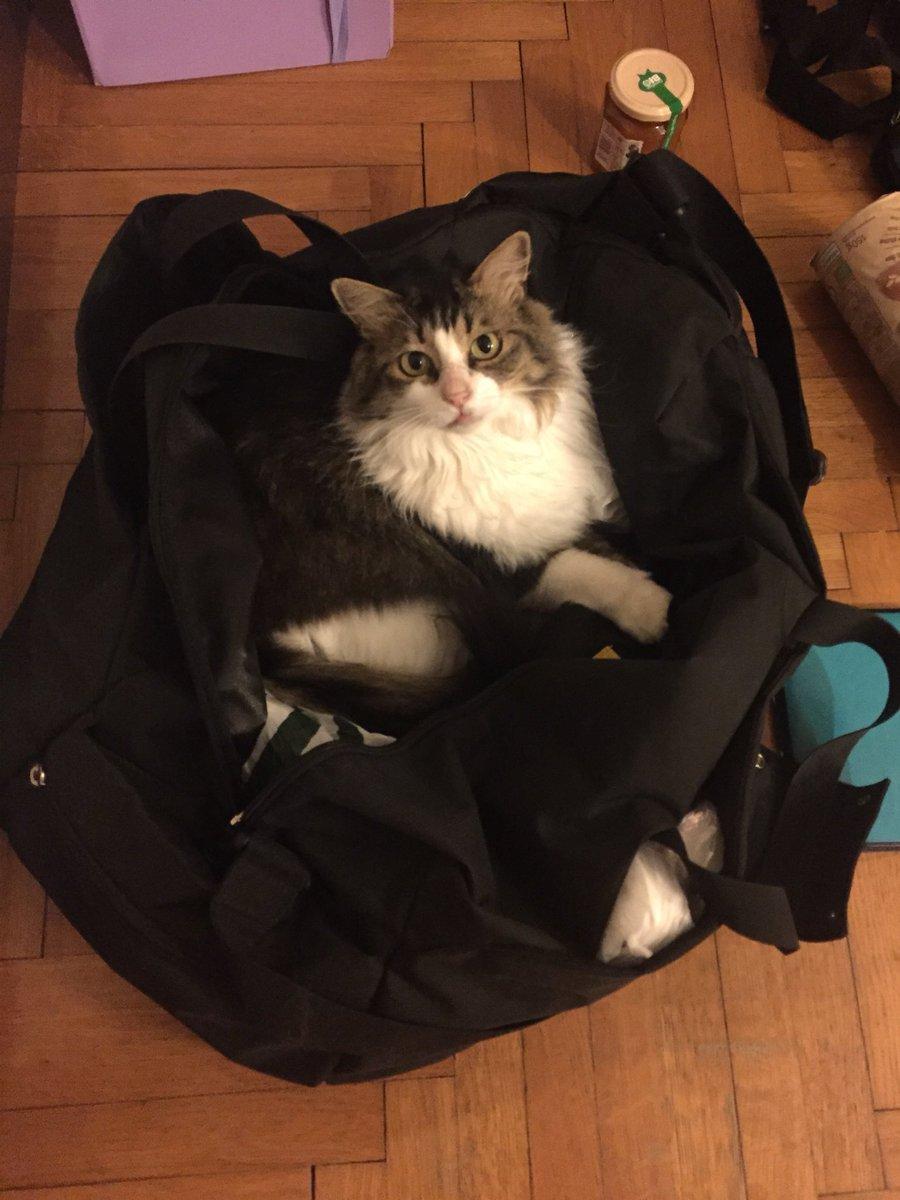"#InternationalCatDay Quando preparo le valigie ""vengo anch'io?""  - Ukustom"
