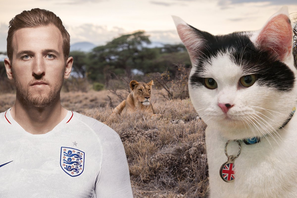On #WorldLionDay day, it's good to remember that we lions come in all shapes and sizes. #ThreeLions @ukinjordan @HKane