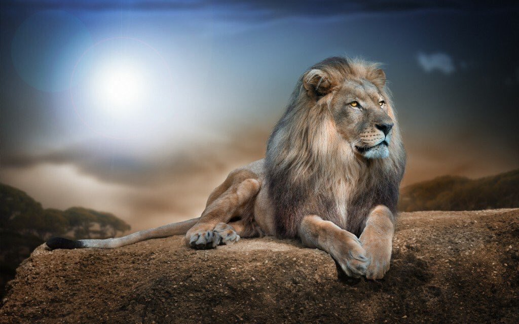 What a poorer place this world would be without these magnificent wild animals. #WorldLionDay <br>http://pic.twitter.com/OARTQociSq
