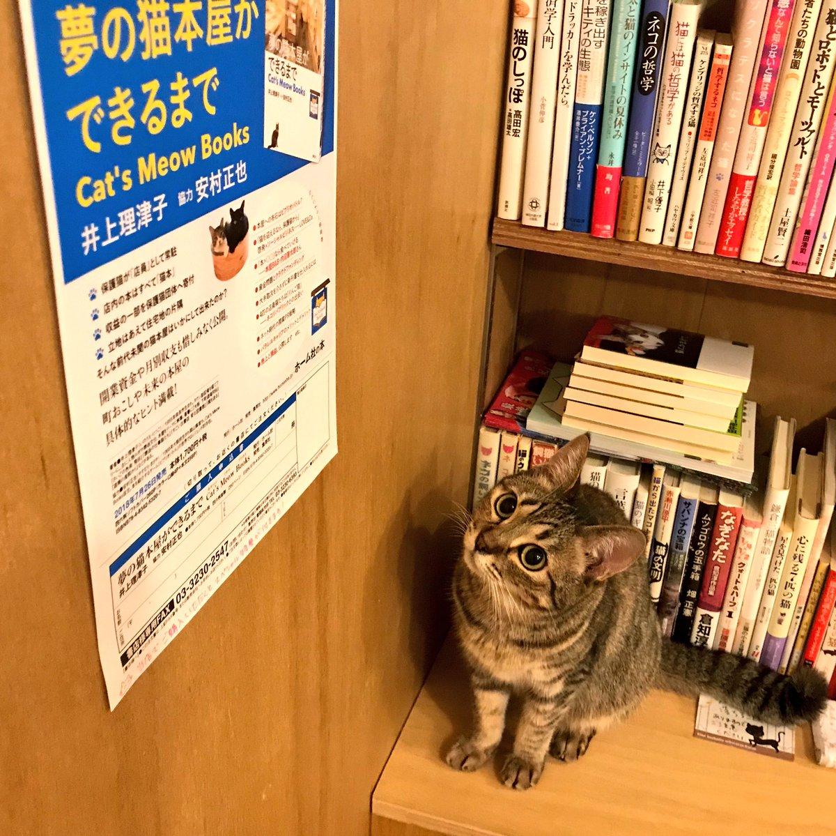 キャッツミャウブックス catsmeowbooks twitter
