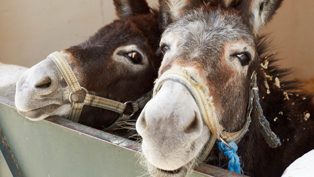 Did you know...donkeys are very affectionate animals and love the company of other donkeys and people  #FactFriday <br>http://pic.twitter.com/Yuphom1gRj