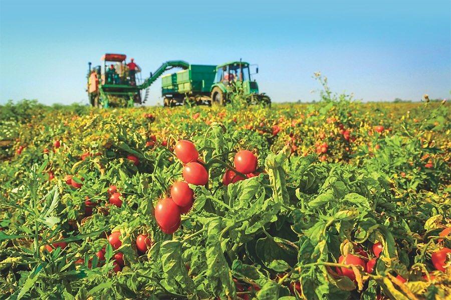 Порошенко підписав закон про стимулювання діяльності сімейних фермерських господарств - Цензор.НЕТ 9976