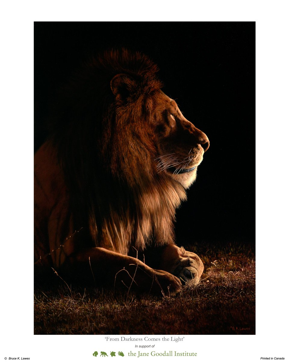 On #WorldLionDay, we remember #Cecil, and his son #Xanda, who were both taken by the heinous act of trophy hunting. To honor lions and make a statement against trophy hunting, get your very own incredible B.K. Lawes art print of Cecil here:  http:// bit.ly/2nvrMH3  &nbsp;  <br>http://pic.twitter.com/zrYOXr1jLd