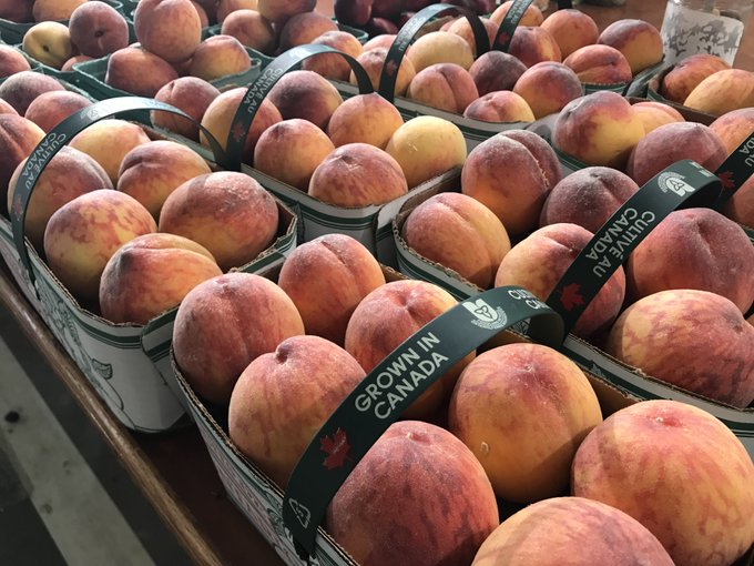 Happy FriYAY 🍑🍑🍑 Join us today in the @HamOntMarket for a great day of shopping! Grab some groceries for the weekend & be sure to include a basket of 🍑SWEET🍑 Ontario Peaches. Open 8:00am to 6:00pm Photo