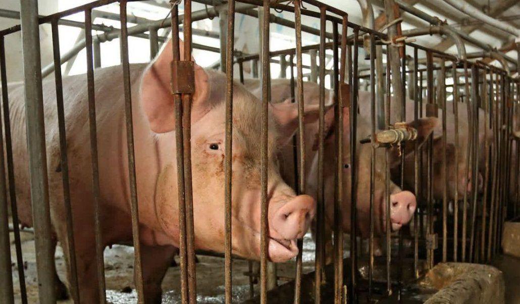 Milioni di animali in #Europa vivono rinchiusi in gabbia in condizioni di sofferenza. Il 25 settembre ci sarà #EndTheCageAge, un\