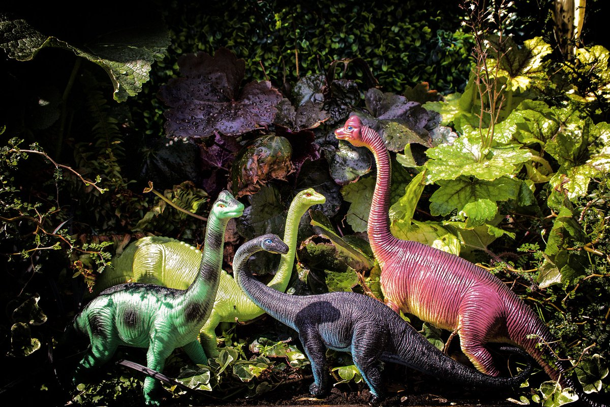 """Diplodocus are from the dinosaur group sauropods, meaning """"lizard feet"""" (humans love giving us weird names.) Sauropods were some of the largest land animals of all time and were herbivores! So kids, eat your veg if you want to grow up to be as strong as me. #FactFriday <br>http://pic.twitter.com/xJDwu7gutK"""