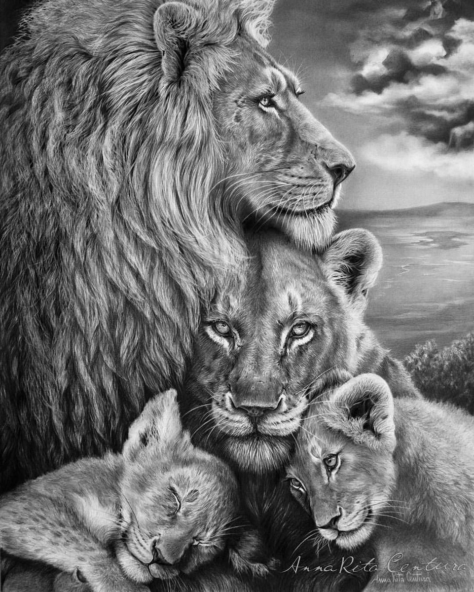 &#39;PRIDE&#39; on #WorldLionDay!  A superb sketch of a #Lion family by Italian artist artist Anna Rita Centura (@arcentura)  #CompassionOverCruelty .  #SaveLions ~ #BanTrophyHunting NOW!!  #WorthMoreAlive<br>http://pic.twitter.com/aNsb8j8sVF