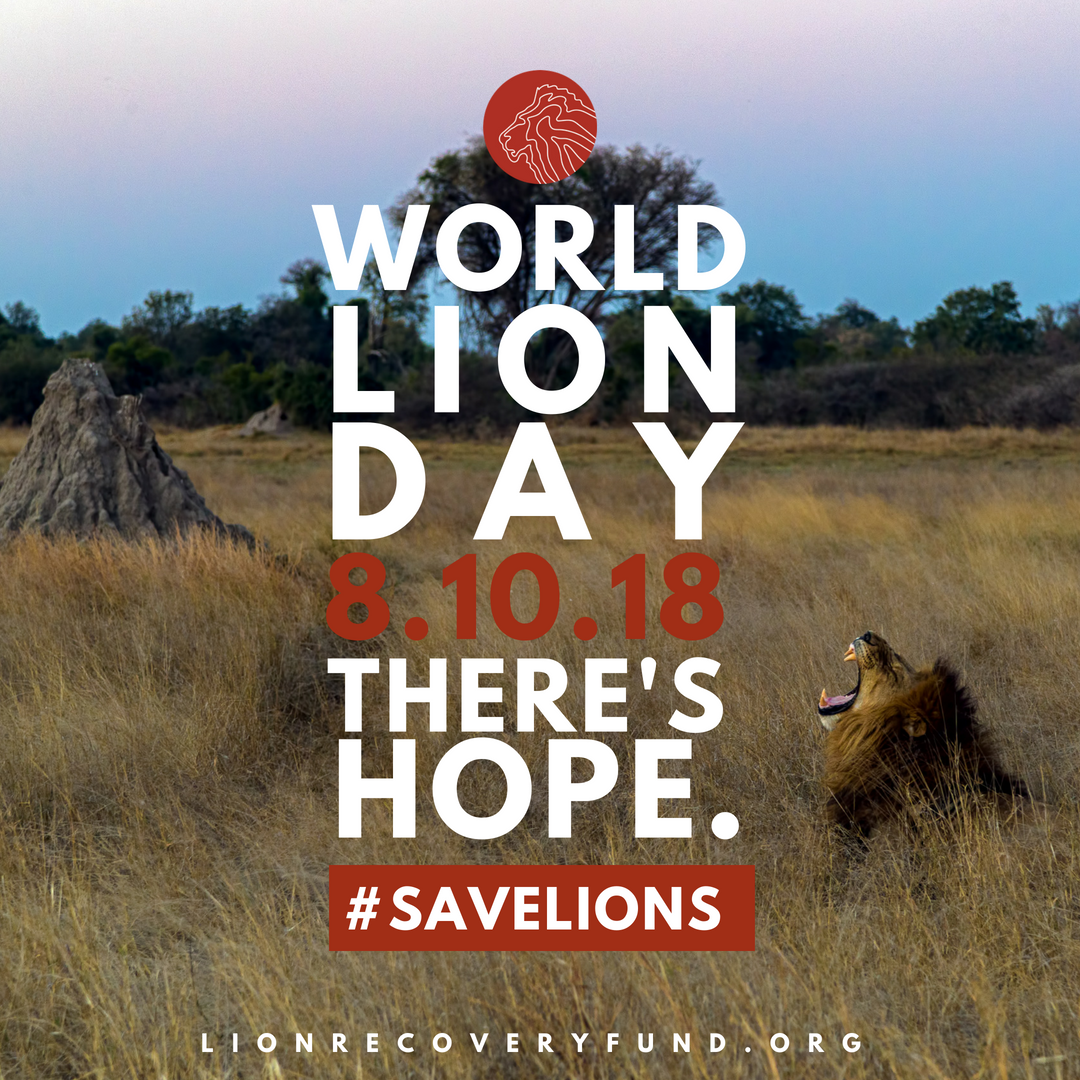 This #WorldLionDay marks our one-year anniversary! To date the LRF, created by @wildnetorg in partnership with @dicapriofdn, has funded 28 conservation projects across 14 countries! Learn more and be part of the movement to bring lions roaring back: bit.ly/2vwer5u