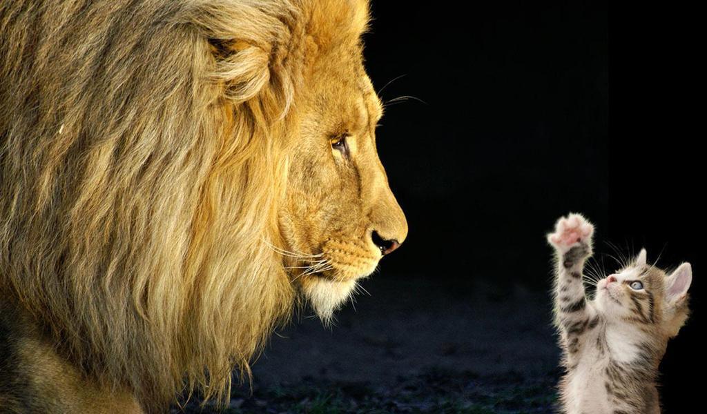Днем, картинки с львицами со словами