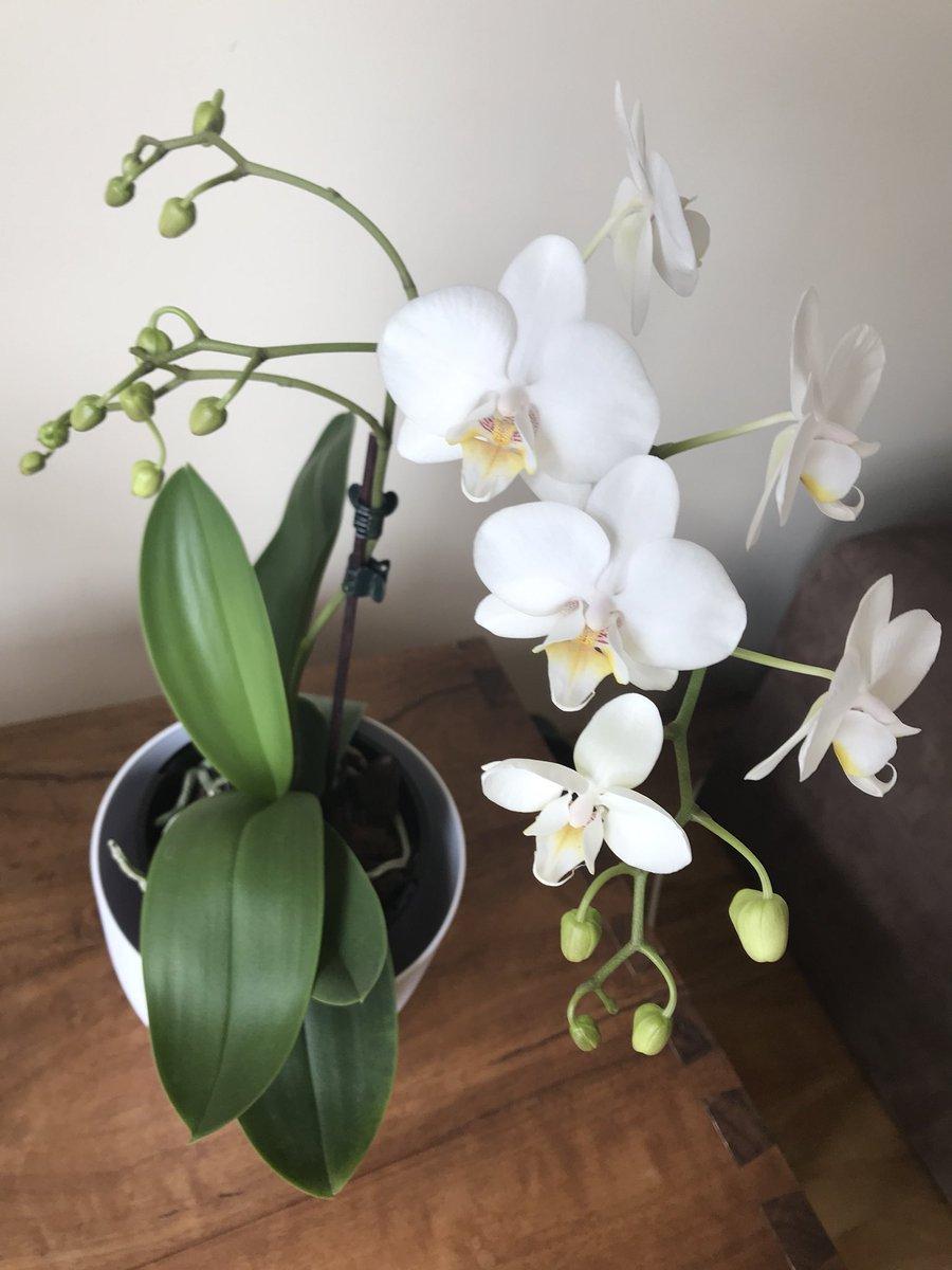 Blooming! https://t.co/kpTAs5PBFl