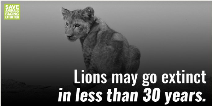 Trophy hunting is a major factor in destroying wild lion prides. If this keeps up, they could be in serious danger. It's time to end the trophy trade for good! #WorldLionDay <br>http://pic.twitter.com/eBPECXF8Mu