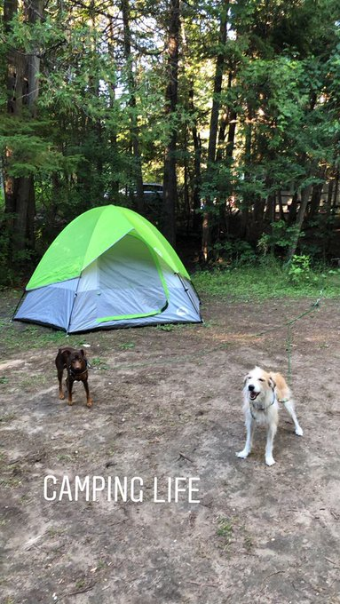 2 pic. Camping with my little family 💕 https://t.co/O8vuxtl59j