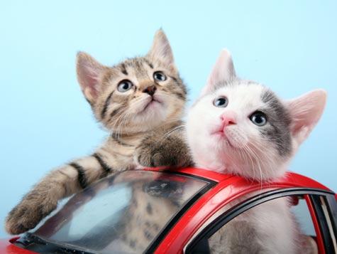 #InternationalCatDay giornata internazionale del gatto,ricordiamo cosa ci serve per viaggiare con i nostri amici animali @MinisteroSalute #11Agosto https://bit.ly/2tbEChd #consigliutili  - Ukustom
