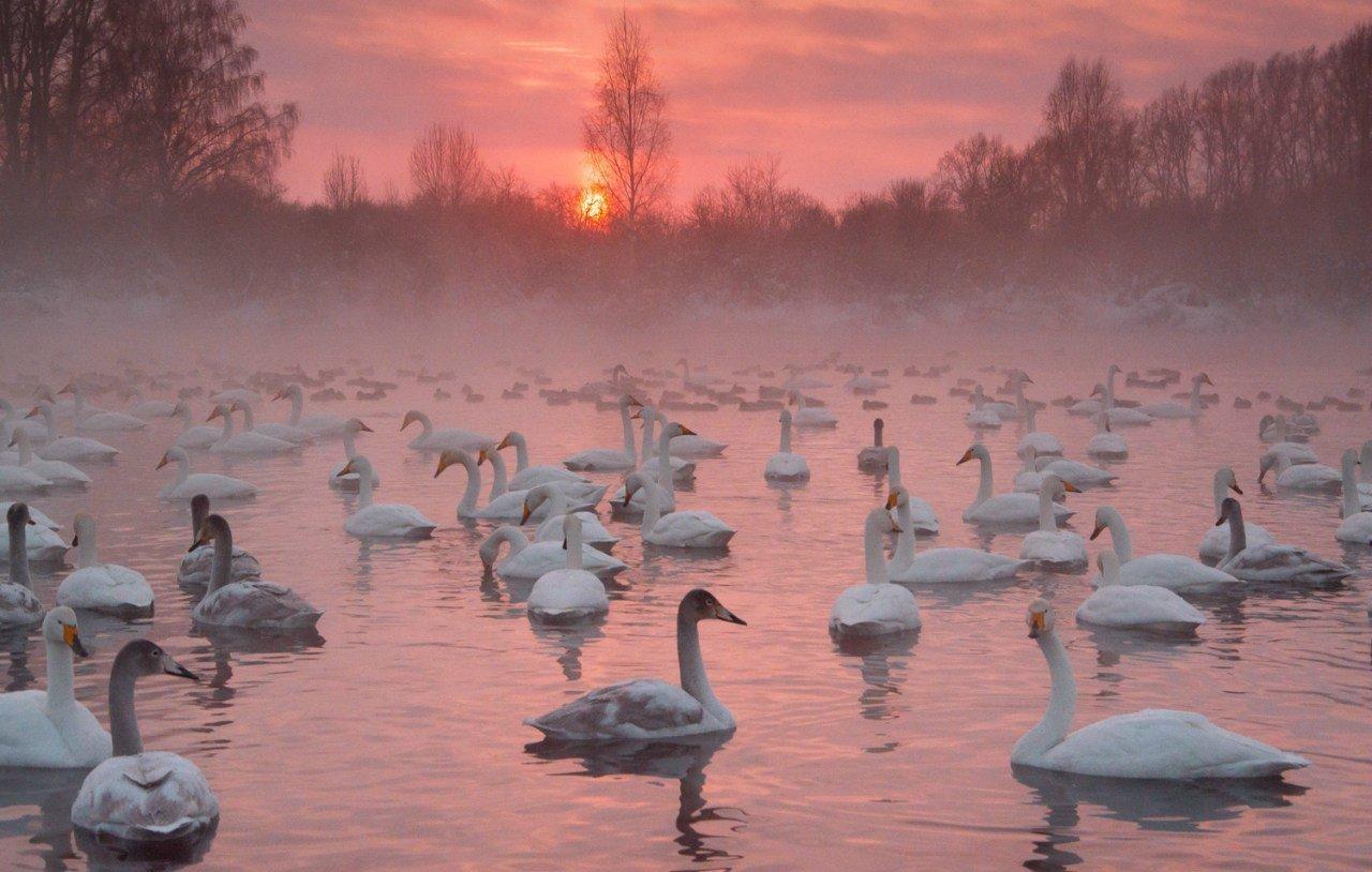 Алтайский край картинки с района советского на озере где лебеди, прикольными надписями