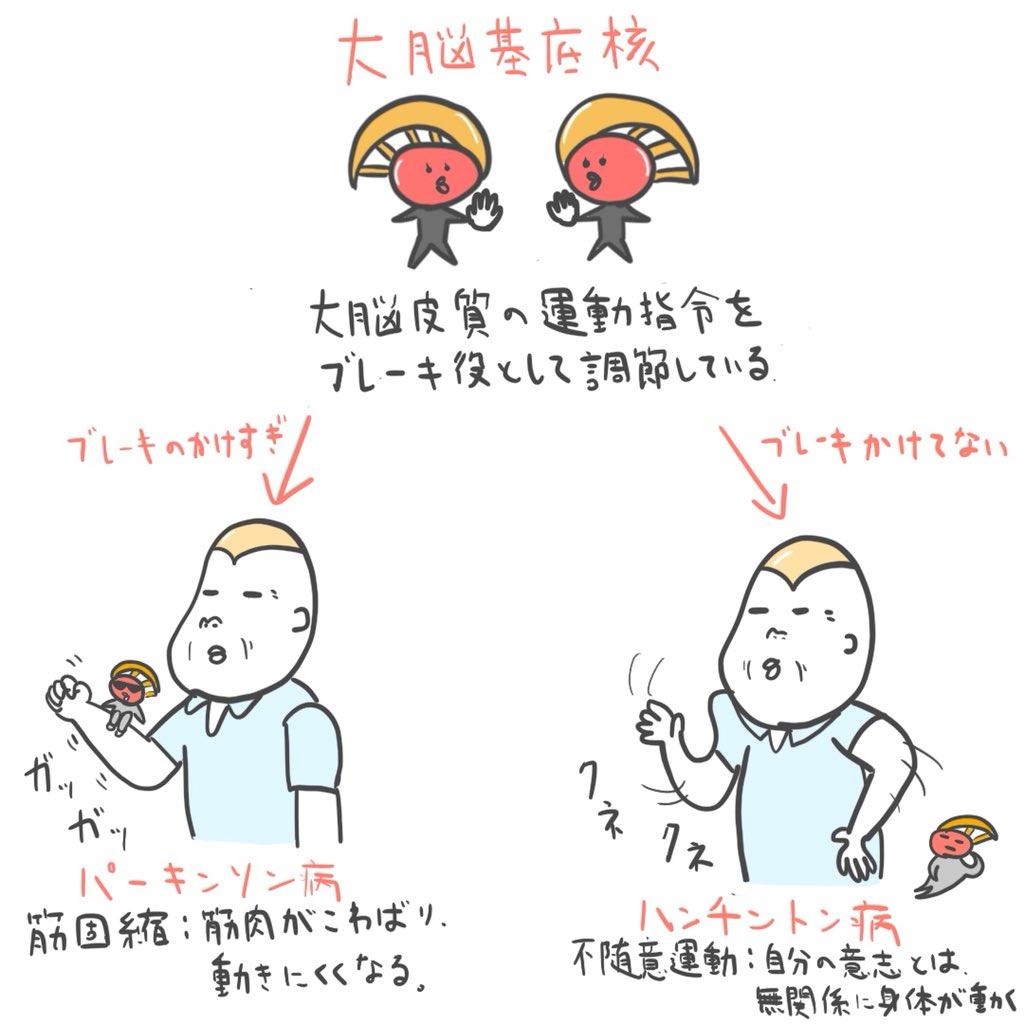 ゴロ−@解剖生理イラスト on Twit...