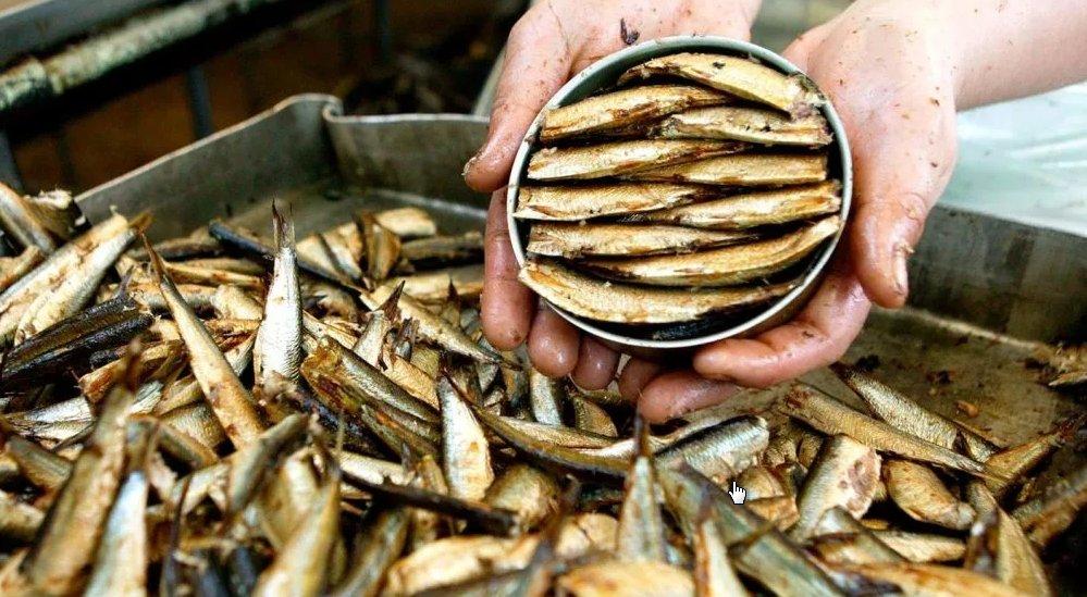 Болезнетворные шпроты: рыбной промышленности Прибалтики можно только посочувствовать