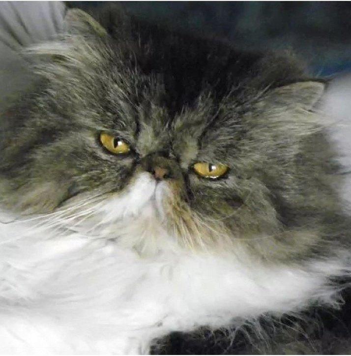 #InternationalCatDay per ricordare il gattino più bello del mondo♥  - Ukustom